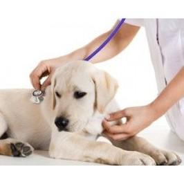 Promotionalwears - veterinary doctors uniforms
